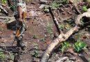 केंद्रीय वन एवं पर्यावरण मंत्रालय की वन सलाहकार समिति ने वर्ष 2011 में डिपाजिट-13 का आवेदन खारिज कर दिया था : आलोक शुक्ला