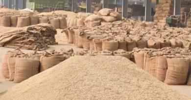 प्रदेश में अब तक 46 हजार 554 क्विंटल धान जब्त