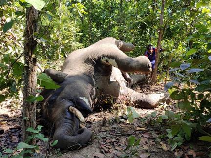 दो हाथियों का शव मिलने से वन विभाग में हड़कंप